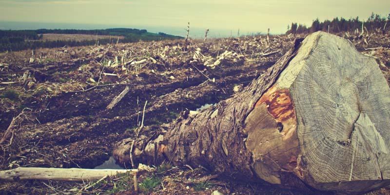 O Brasil e seus derrubadores de árvores